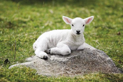 The Spotless Lamb – Focus 17 | Hear God's Heart