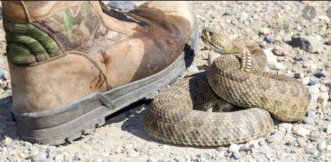 Stomp on a snake